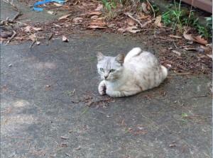 田代島猫5