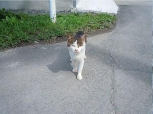 田代島猫2