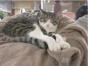 猫居酒屋東京