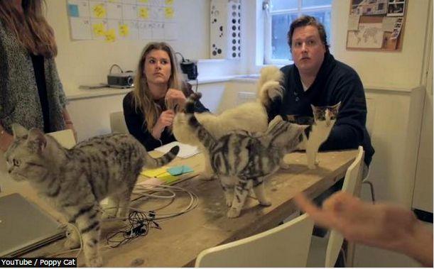 猫オフィス1