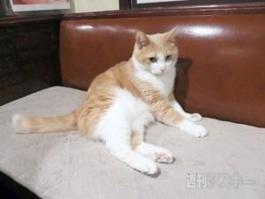猫居酒屋東京2