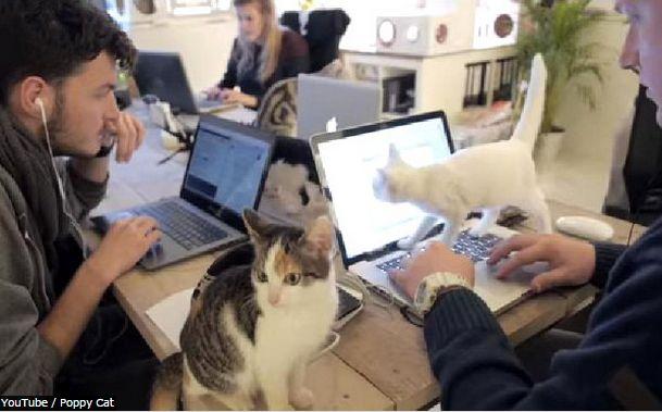 猫オフィス2
