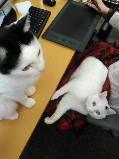 猫オフィス3