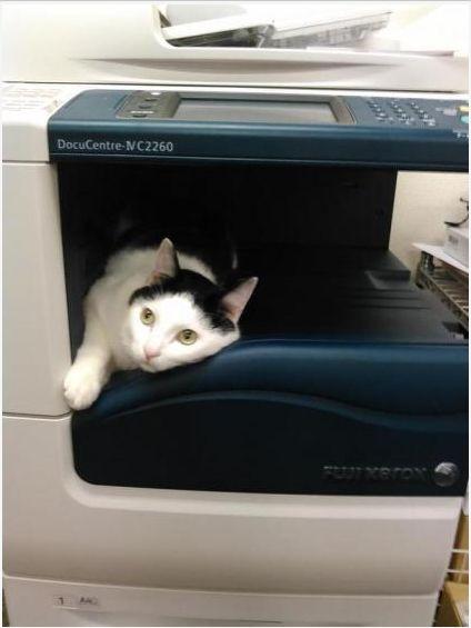 猫オフィス4
