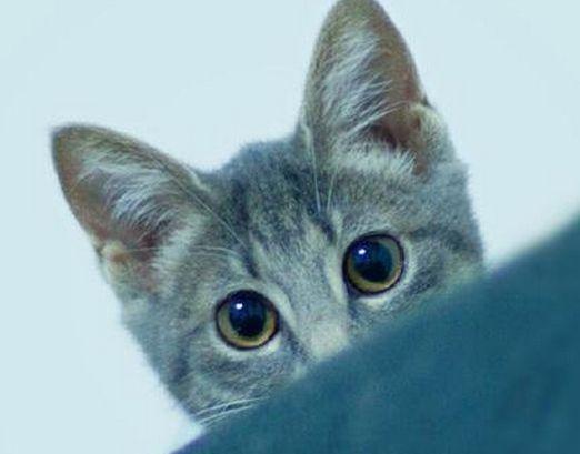 『世界から猫が消えたなら』は読むべきか?見るべきか?