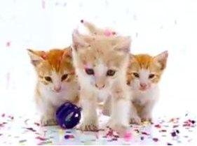 2月22日の猫の日を上手につかって猫の買い物をしてみる(゜o゜)