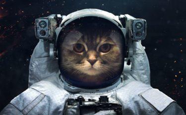 【猫の面白動画】しゃべる猫の動画をあつめてみた。