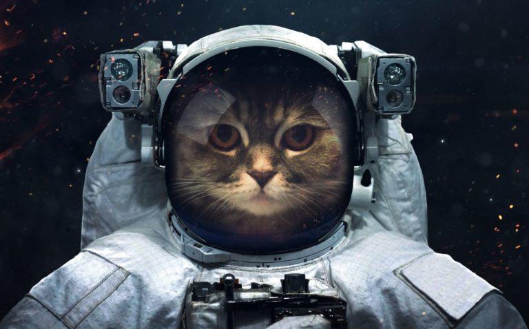しゃべる 猫 動画 が